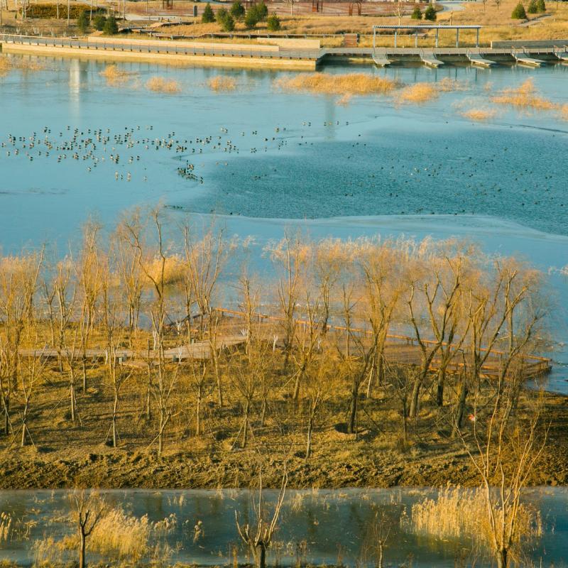 Landscape - Nature Context